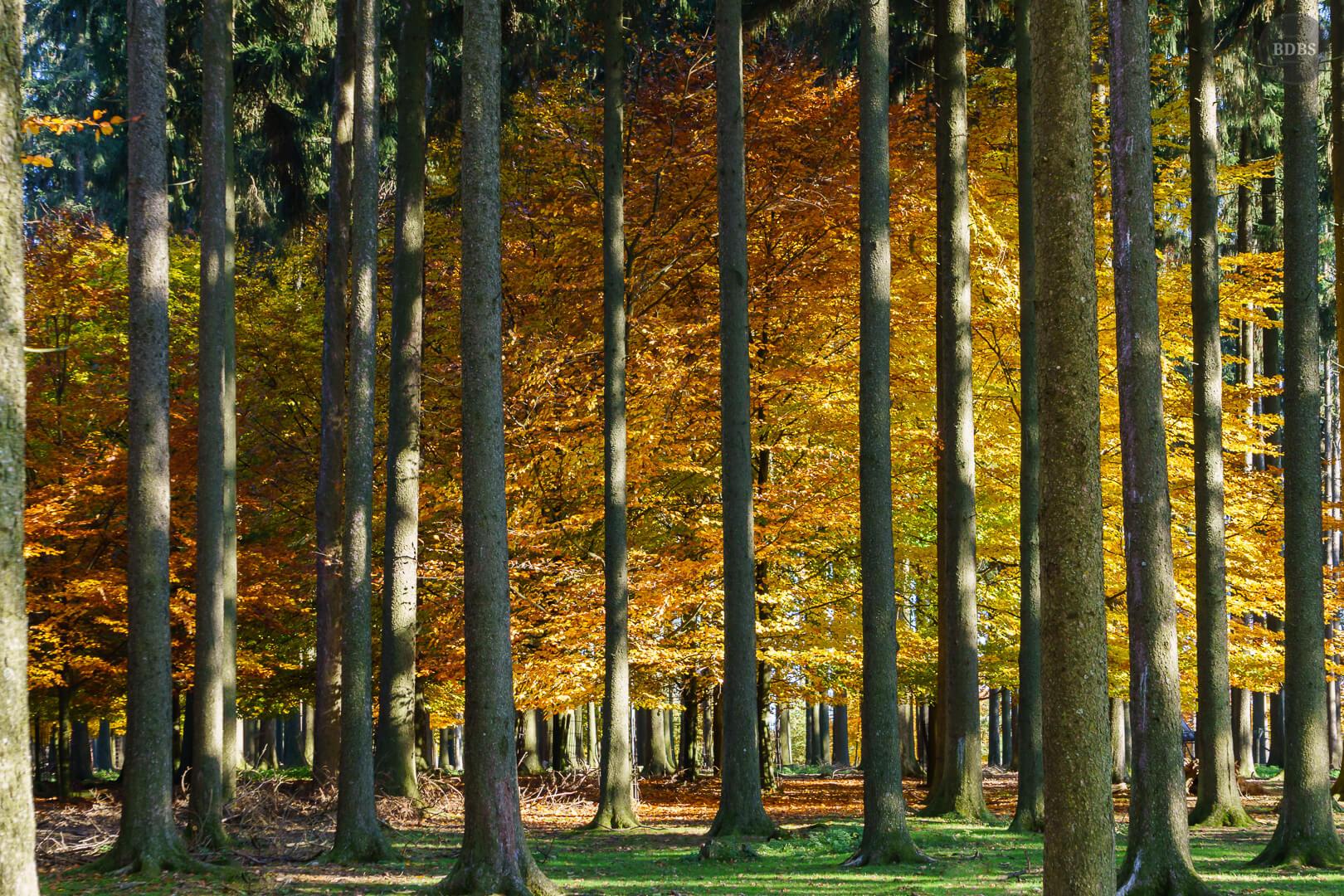 Herbst im Wildpark Poing (ISO 500 - 55mm - f/8 - 1/100Sek)