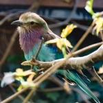 Intermezzo: Vogelpark Olching