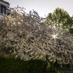 Intermezzo: Blütenpracht