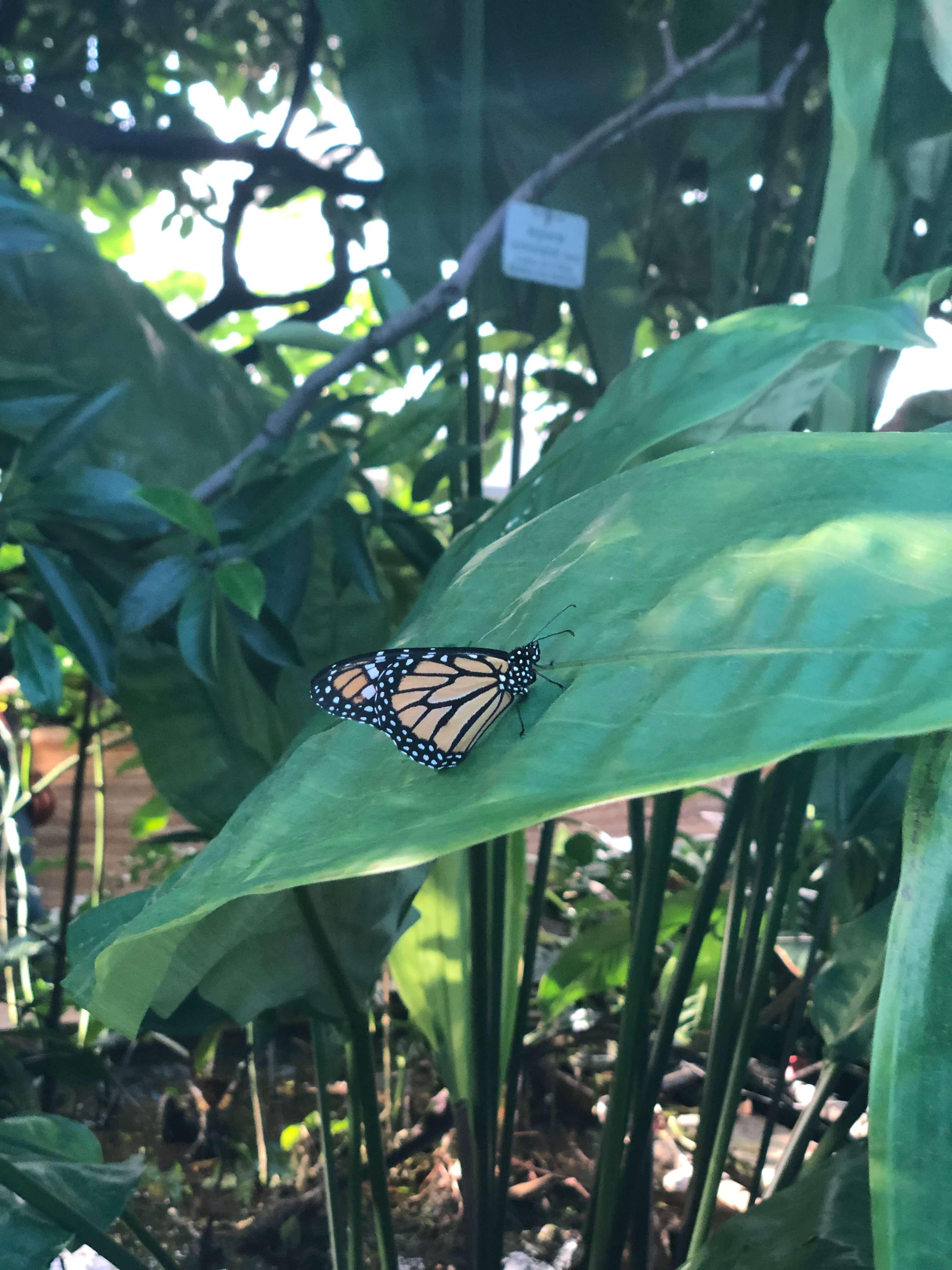 Tropische Schmetterlingsausstellung @ Botanischer Garten München | München | Bayern | Deutschland