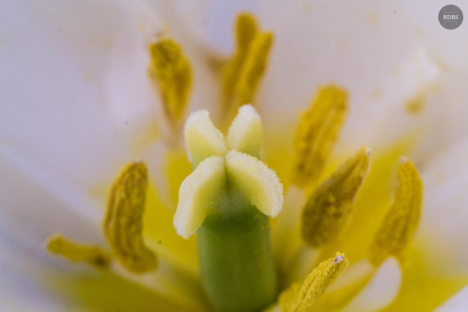 Makroaufnahmen Blumen (1)